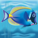 Exotic fish: Acanthurus. Realistic  image of ocean fish underwater Vector Illustration