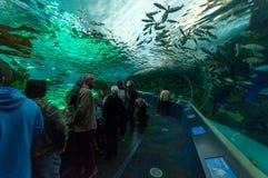 Exotic fish in the aquarium Stock Image