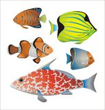 Exotic fish collection Stock Images