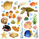 Exotic Fish, coral reef, algae,  Royalty Free Stock Photos