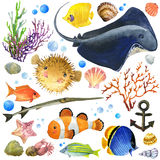 Exotic Fish, coral reef, algae, unusual sea fauna, sea shells,. Underwater world set. watercolor illustration for children. anemones and decoration marine theme Royalty Free Stock Photos