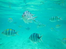 Exotic fish from El Nido Philippines stock photography