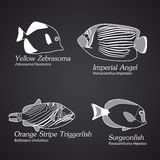 Exotic fish in linear style. Part 1 Royalty Free Stock Photos