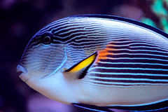 Exotic fish living in a deep ocean life Stock Photos
