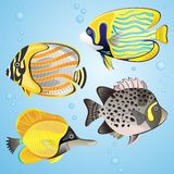 Exotic fish set Royalty Free Stock Image