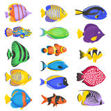 Exotic Fish Set Royalty Free Stock Photography