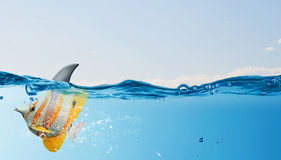 Exotic fish with shark flip Stock Photo