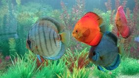 Exotic fish species and plants for a beautiful home live jewel Stock Photos