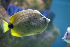 Exotic fish in tank Stock Photos