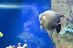 Exotic fish. In their natural habitat Stock Photography