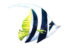 Exotic fish (tropical bannerfish). Watercolor Royalty Free Stock Images