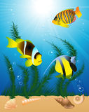 Exotic fish under water Stock Images
