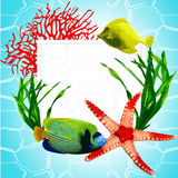 Exotic fish in the underwater world Stock Photography