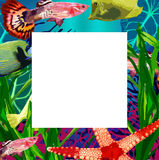 Exotic fish in the underwater world Royalty Free Stock Photos