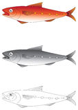 Exotic fish vector illustration. Exotic fish in colour, greyscale and outline vector illustration vector illustration