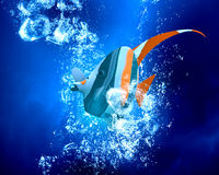 Exotic fish in water Royalty Free Stock Images