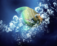 Exotic fish in water Royalty Free Stock Photography