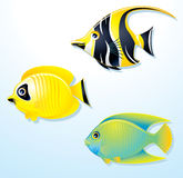 Exotic Fishes Stock Photo