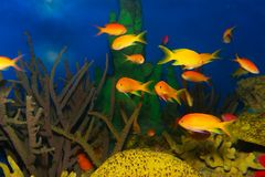 Exotic fishes. Sea world, vibrant colors Stock Photography