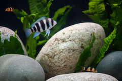 Exotic fishes Royalty Free Stock Photography