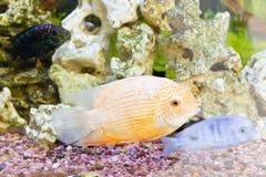 Exotic fishes in zoo aquarium Royalty Free Stock Photos