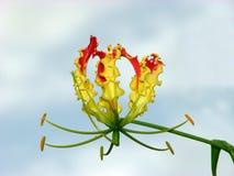 Exotic Flora stock image