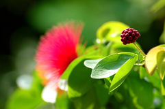 Exotic flower. Nature royalty free stock photo