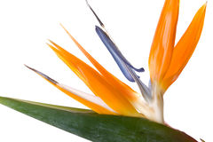 Exotic flower Stock Photos