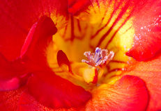Exotic flower Stock Photos