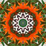 Exotic flower abstract pattern kaleidoscope stock illustration
