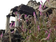 Exotic flower in Angkor Wat. Cambodia stock photos