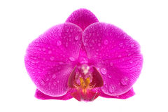 Exotic flower with drops of water Royalty Free Stock Image