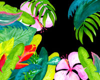 Exotic flower garden watercolor illustration on black background for text Stock Photos