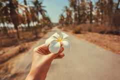 Exotic flower in the hand of a tourist on rural road. Asia travel and holiday concept Royalty Free Stock Photography