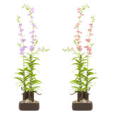 Exotic flower pots Royalty Free Stock Photography