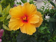 Exotic flower. Exotic tropical flower, equator, Galapagos Stock Photography