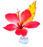 Exotic flower in the vase stock photography