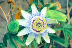 Exotic flower. Stock Images