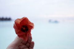 Exotic flowers on the Maldives resort island Stock Photos