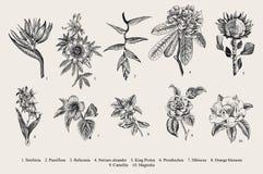 Exotic flowers set. Botanical vector vintage illustration. Design elements. Black and white vector illustration