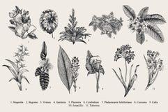 Exotic flowers set. Botanical vector vintage illustration. Royalty Free Stock Photo