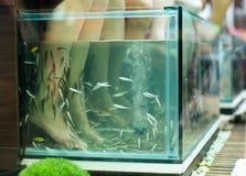 Exotic foot massage in aquarium Royalty Free Stock Images