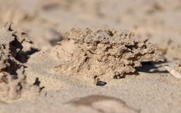 Lightening struck sand crystals near El Golfo de Santa Clara, Sonora, Mexico. Exotic formation of the sand that has been crystalized by a lightening strike that Royalty Free Stock Photo