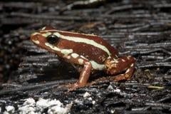 Exotic frog Stock Photo