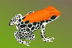 Exotic frog 3. Exotic orange white frog on green background stock illustration