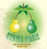 Exotic fruit. Two exotic tropical fruit on the stem stock illustration