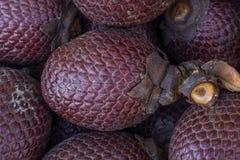 Exotic fruit of America: Aguaje or Moriche, palm fruit, buriti nuts, mauritia flexuosa, Maurity palm.  royalty free stock photos
