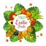 Exotic fruit and berry poster with tropical palm. Leaf. Tangerine, kiwano and physalis, pandan, longkong and jambolan, lucuma, mamoncillo and cocona, bael and royalty free illustration