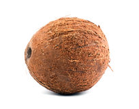 Exotic fruit coconut. Close fresh, organic, brown coconut,  on a white background. A tasty whole coconut. Close fresh coconut,  on a white background. Exotic Royalty Free Stock Images