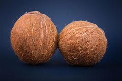 Exotic fruit coconut full of organic nutrients. Whole fresh and brown coconuts on a dark blue background. Tropical nuts. Close up of two whole and fresh Royalty Free Stock Images